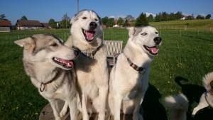 3_chiens